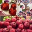 rosh-hashana-5777-collage