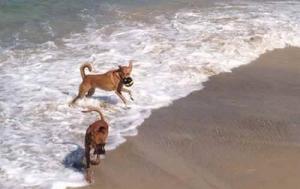 Best Beaches in Tel Aviv- HiltonDog Beach